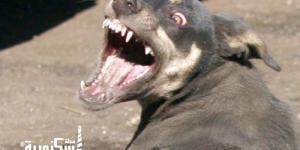 كلب مسعور يعقر 37 شخصًا بمنطقة العامرية وما زال الكلب طليقًا