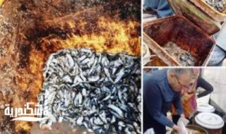قبل تداولها بأسواق الإسكندرية التحفظ على كمية من الأسماك والبطارخ الفاسدة