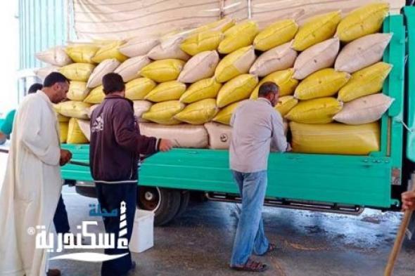 موسم توريد القمح يحقق ارقام ايجابية
