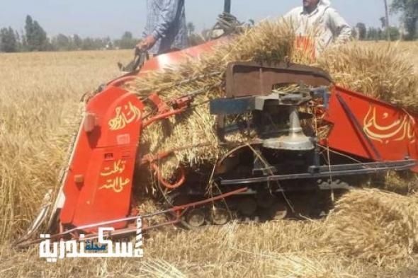وزير الزراعة واستصلاح الاراضي...بدء موسم حصاد القمح في الإسكندرية 20 أبريل
