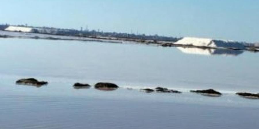 غرق شخص بمياه الملاحات في الإسكندرية والإنقاذ النهري يقوم بالبحث عن الجثة لإنتشالها