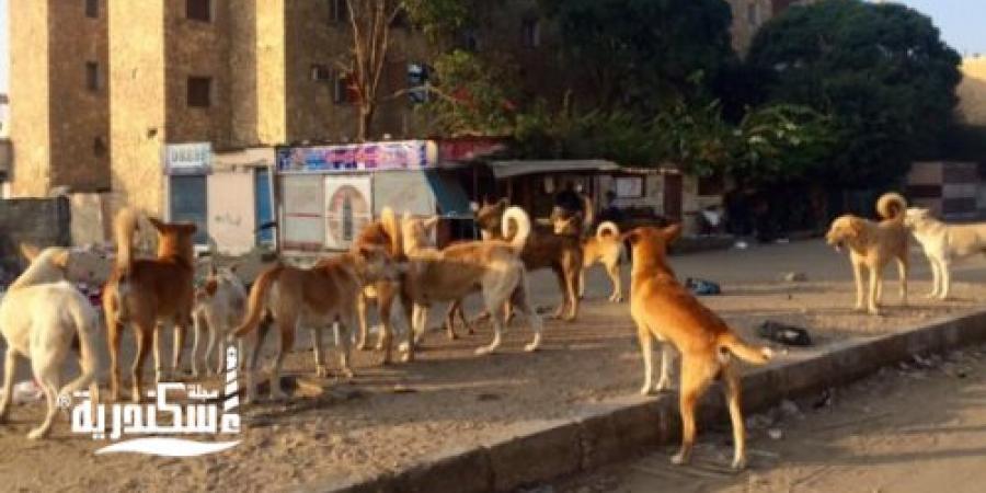 حي غرب ....التخلص من 25 كلبًا ضالًا خلال حملة في الشوارع
