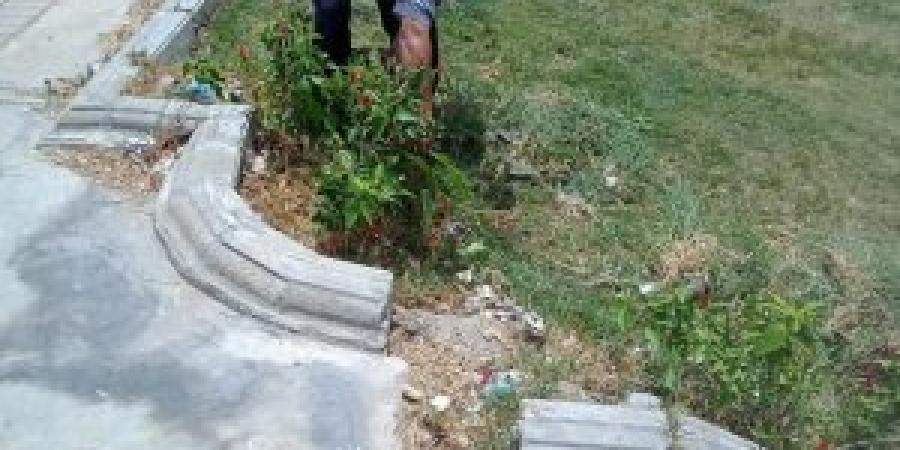 حي وسط...حملة لرفع كفاءة الحدائق والمسطحات الخضراء